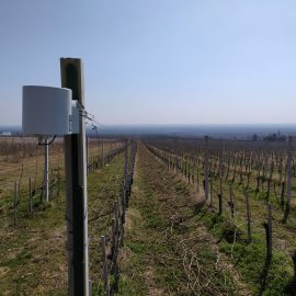 Digital technologies for state-of-the-art wine production